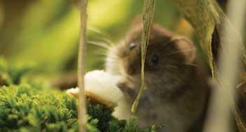 hamster jumper bussum