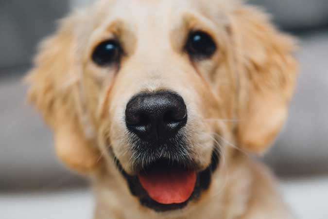 Honden Jumper Bussum