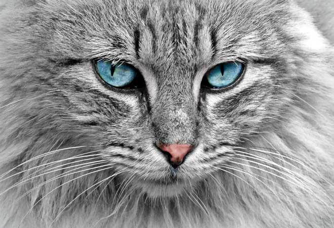 Katten Jumper Bussum